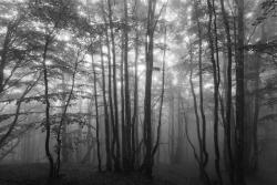 Voyage en noir et blanc 14