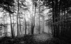 Voyage en noir et blanc 15