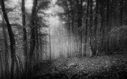Voyage en noir et blanc 16