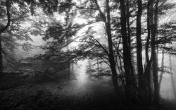 Voyage en noir et blanc 20