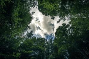 Nature, Photographie de nature, auteur photographe, David Parenteau