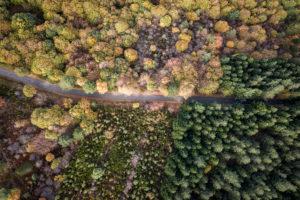 Forêt Cévenole
