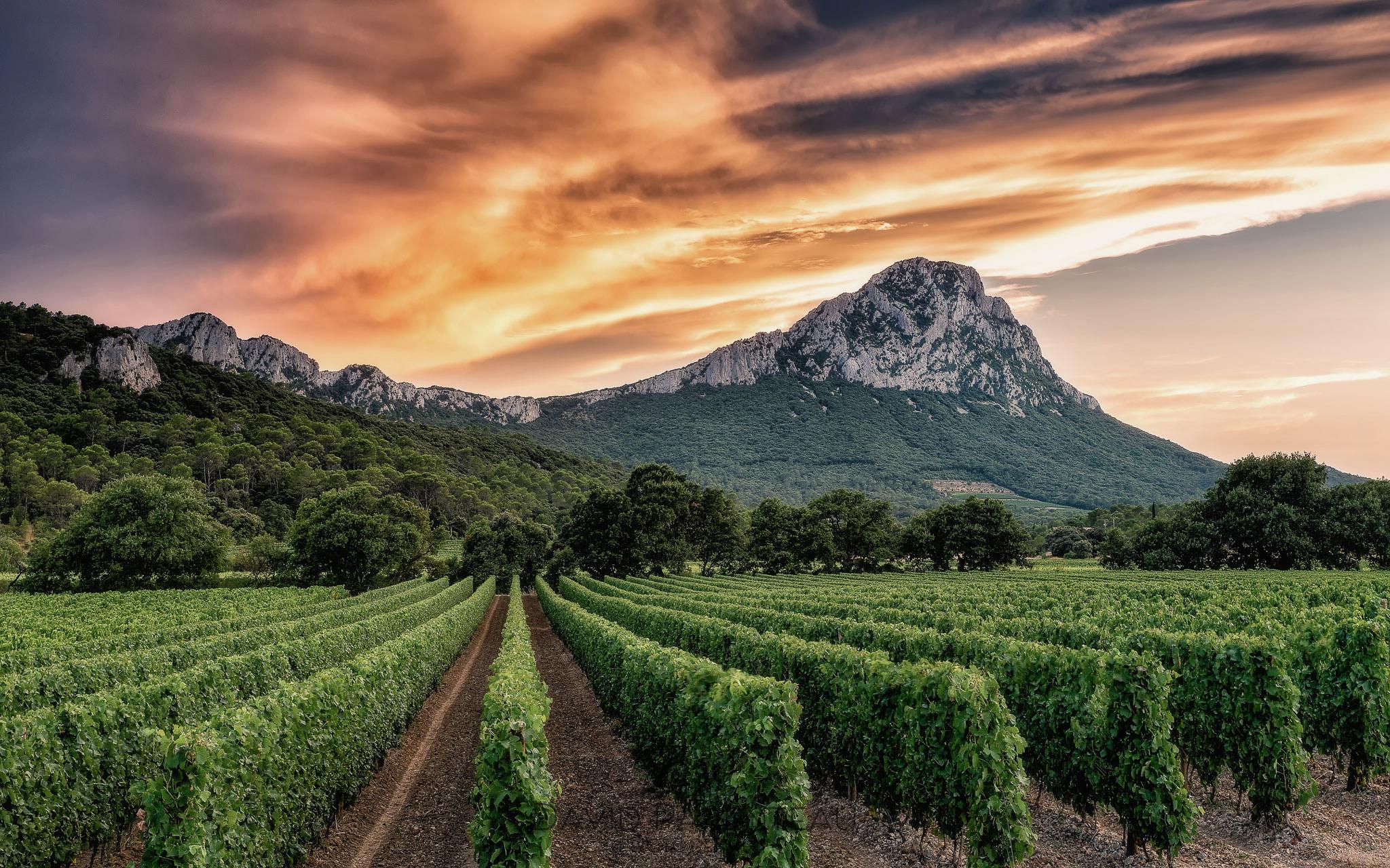 vignes et Pic saint Loup